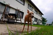 Сингапур ужесточит наказание за плохое обращение с животными