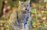 В Гродно объявили карантин из-за бешеных котов