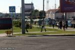 В Гомеле в час пик встали более 50 троллейбусов