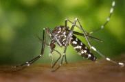 Житель Могилева привез из Таиланда лихорадку денге