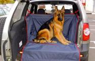 В тендере на гамаки для собак МВД обозначило «нужную» компанию