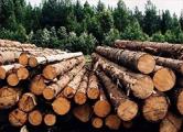 Минлесхоз признался в провале модернизации деревообработки