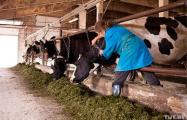 Более чем у 95% колхозов Могилевщины нет денег на зарплаты