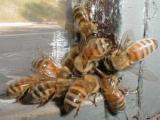В Турции разбился фургон с пчелами