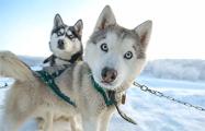 Генетическое исследование ученых раскрыло историю отношений человека и собак