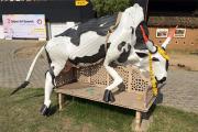 Индийская полиция извинилась перед надувшим пластиковую корову художником