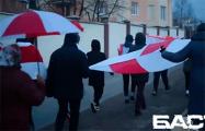 Сеница гуляет под бело-красно-белыми флагами