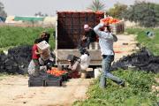 Израиль разрешил транзит продуктов из Газы на Западный берег