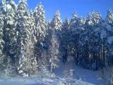 Минский Дед Мороз сегодня прибудет в свою резиденцию в парке Горького на лыжах