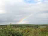 Великобритания продаст Шервудский лес
