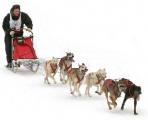 Зимние гонки на собачьих упряжках впервые устроят в Беларуси 29 января