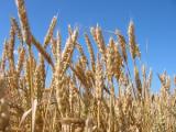 На закупку для АПК Беларуси недостающих удобрений к весеннему севу будет направлено Br578 млрд. кредитных средств