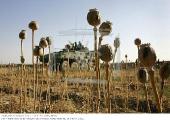 Эксперты СНГ согласовали проект Соглашения о порядке передачи образцов наркотических средств