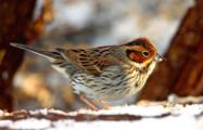 В Беларуси отметили новый вид птиц