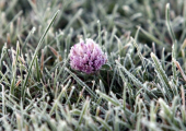 В субботу в отдельных районах Беларуси ожидаются ночные заморозки
