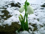 Первая неделя весны в Беларуси ожидается холодной