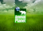 На «Космос ТВ» вернули Discovery и Animal Planet