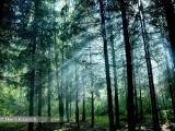 В Беларуси в 2011 году будут созданы новые леса на 24 тыс. га