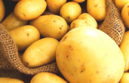 Ученые вывели картофель, который не повреждает колорадский жук