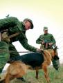 Брестские пограничники пресекли контрабанду оптических прицелов для стрелкового оружия