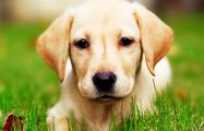 Пришедшая послушать оркестр собака стала звездой Сети