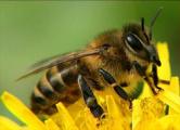 Пчелы сорвали футбольный матч в ЮАР