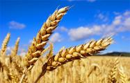 Фермеры получат еще до 70 миллионов евро от ЕС из-за эмбарго РФ