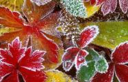 Во вторник ночью ожидается до 6 градусов мороза