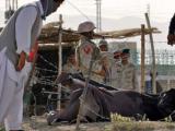 Пакистанских полицейских уволили за убийство группы россиян