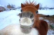Фотофакт: По центру Гродно бегают пони