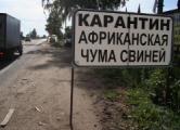 Ветеринар: Эпидемия свиней нанесет сильный удар по белорусской экономике