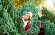 Почем продают новогодние деревья на елочных базарах Минска