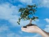 Более 35 млн. деревьев посажено в Беларуси во время Недели леса-2011