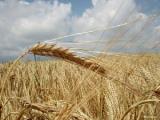 Торговля должна обеспечить потребительский спрос на продовольствие даже в ущерб экспорту - Румас