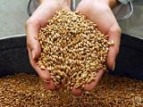 Беларусь к 2015 году планирует довести экспорт биотехнологической продукции до $200 млн. в год