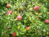 Предприятия Белкоопсоюза приступили к закупке садовой клубники у населения
