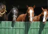 Беларусь контрабандой поставляет на российские бойни животных