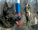 Россия и Беларусь: на границе тучи ходят хмуро?