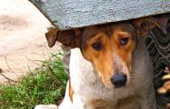 В Полоцке выселяют приют для собак: начался сбор средств