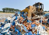 Россельхознадзор может запретить реэкспорт плодоовощной продукции из Беларуси