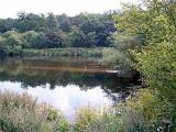 В одну из крупнейших рек Великобритании попал цианид
