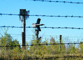 Deutsche Welle: Беларусь может потерять оружейный рынок Венесуэлы