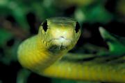 Натравивший на себя ядовитую змею в прямом эфире блогер скончался