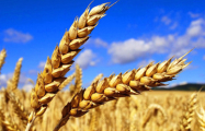 Украина нацелилась на рекордный экспорт зерна