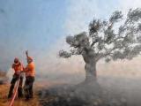 Греческого фермера обвинили в массовых поджогах