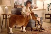 Шотландский пони из рекламы Amazon растрогал пользователей соцсетей