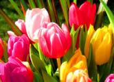 Таможенники изъяли восемь тонн цветов