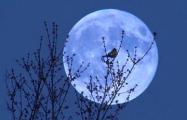 Сегодня ночью жители Земли смогут наблюдать суперлуние