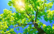 В Беларусь пришла астрономическая весна