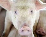 Латвия запретила ввоз белорусских мясных и молочных продуктов